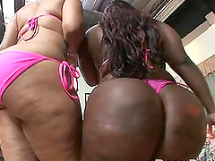 Apologise, big black booty clapping interracial fuck